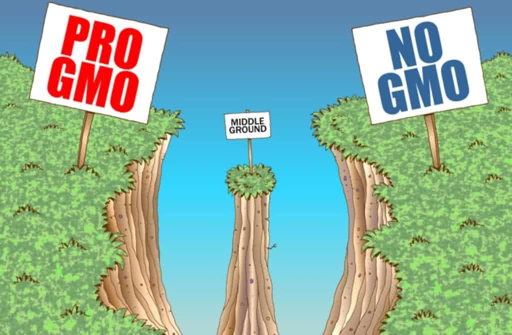 Belehalsz a GMO-ba?