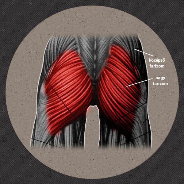 Egy kis anatómia - a csípő deltaizom, és a farizom két nagy rostja