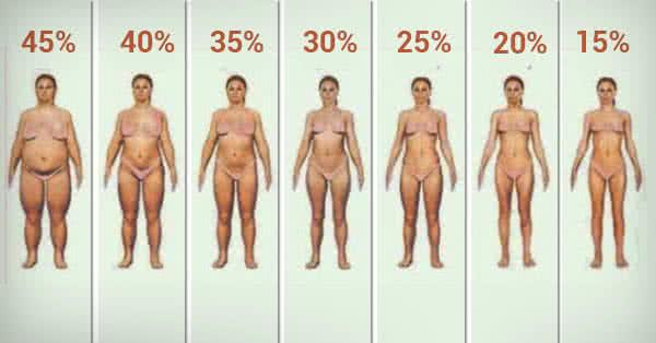 Testzsír százalék