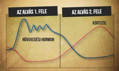 A növekedési hormon kibocsátása az első alvási ciklusban
