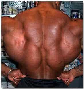 Yohimbe testépítés eredmények izomtömeget és a zsírégetést
