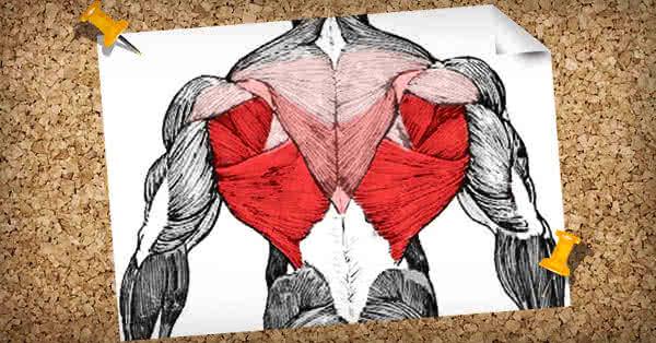 Musculatura spatelui