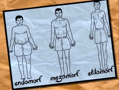 fogyás az endo mezomorf esetében)