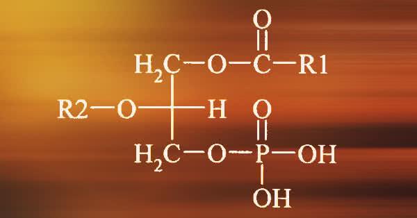 Foszfatidsav: egy új, izomépítést segítő hatóanyag!