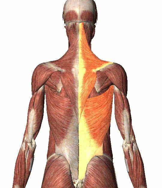 miért húzódik az izom? vastagbél fájdalom rák