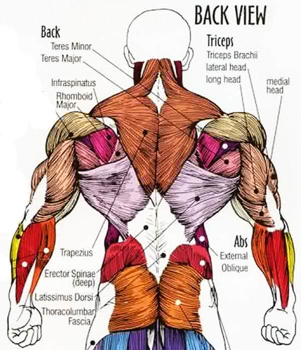 karcsú le a hát alsó részén hogyan lehet lefogyni az egész testet