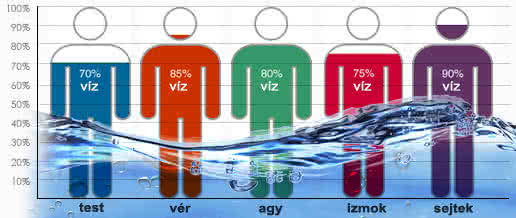 Testünknek több, mint a fele víz