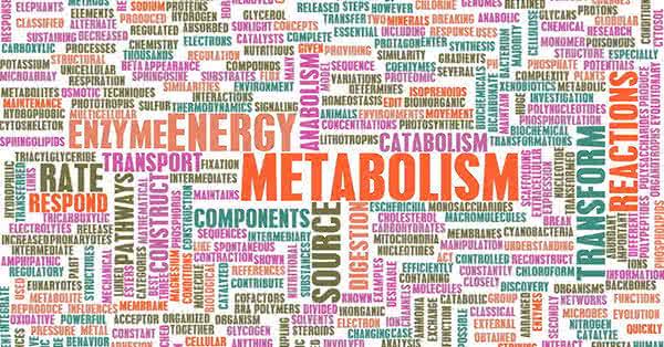 Fogyj 3 kilót egy hét alatt! Itt az anyagcsere-gyorsító diéta! | helyimertek.hu