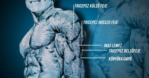 Alap anatómia - Otthoni tricepszedzés