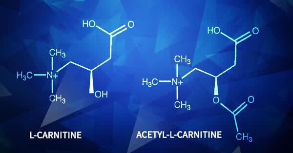 Acetil L-karnitin (ALC) - nem stimuláns teljesítményfokozó